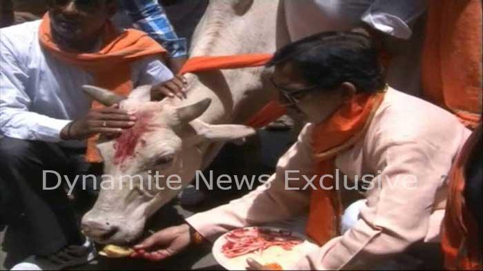 गाय की पूजा करते शिवसेना के कार्यकर्ता