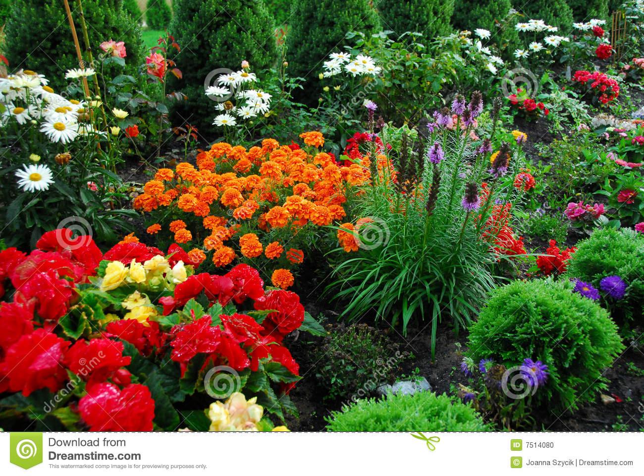 फूल पौधे
