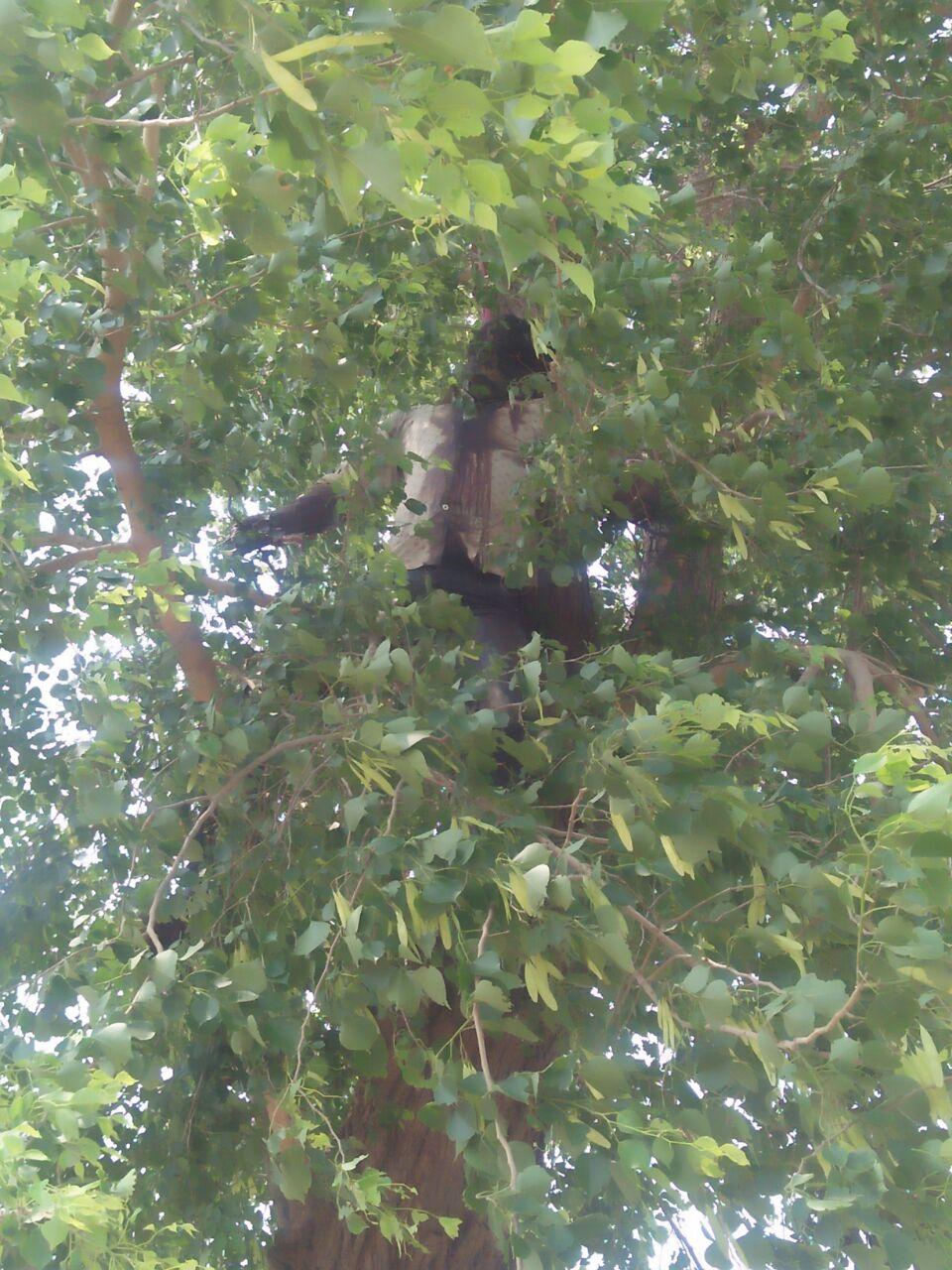 शीशम के पेड़ से लटकता मिला शव