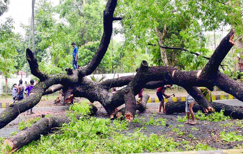 आंधी तूफान से गिरे कई पेड़