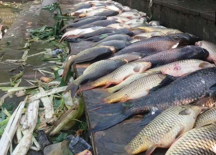 सरोवर के किनारे मृत पड़ी मछलियां