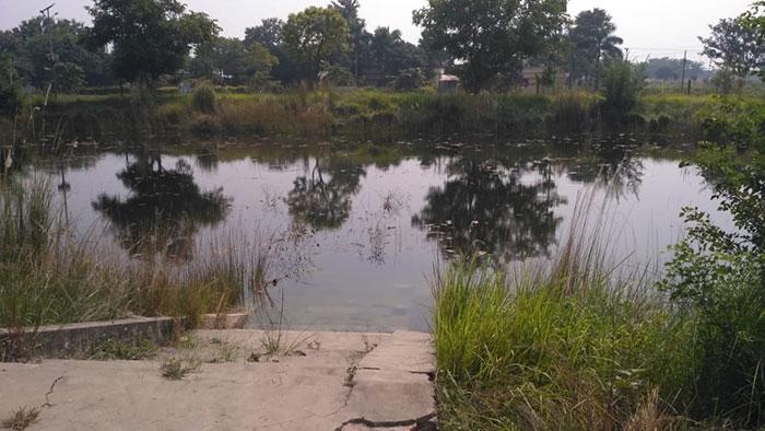 लोहिया पार्क के तालाब में दूषित गन्दा पानी