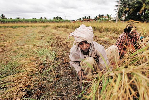 आगामी अंतरिम बजट में कृषि कर्ज का लक्ष्य 12 लाख किया जा सकता है