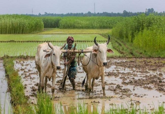 बेमौसम बारिश से फसलों को हुई  भारी क्षति (फाइल फोटो)