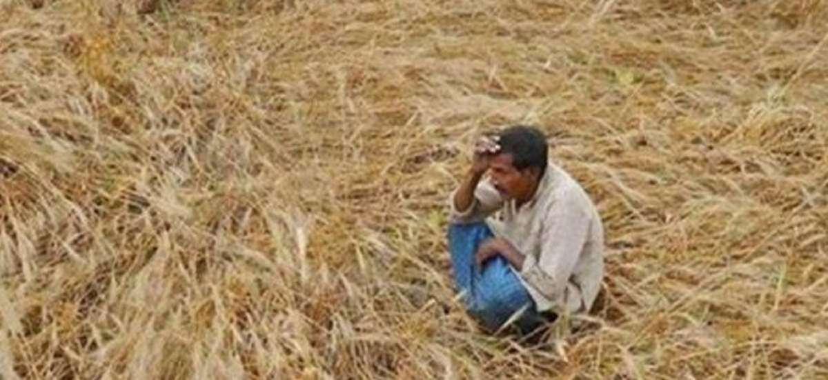 गेंहू के खेत में बैठा परेशान किसान (फाइल फोटो)